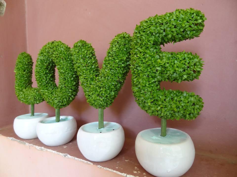Cho thuê cây cảnh ngày Valentine